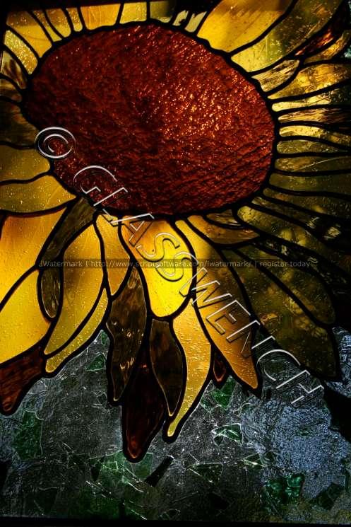 sunflower cool effectswtmk